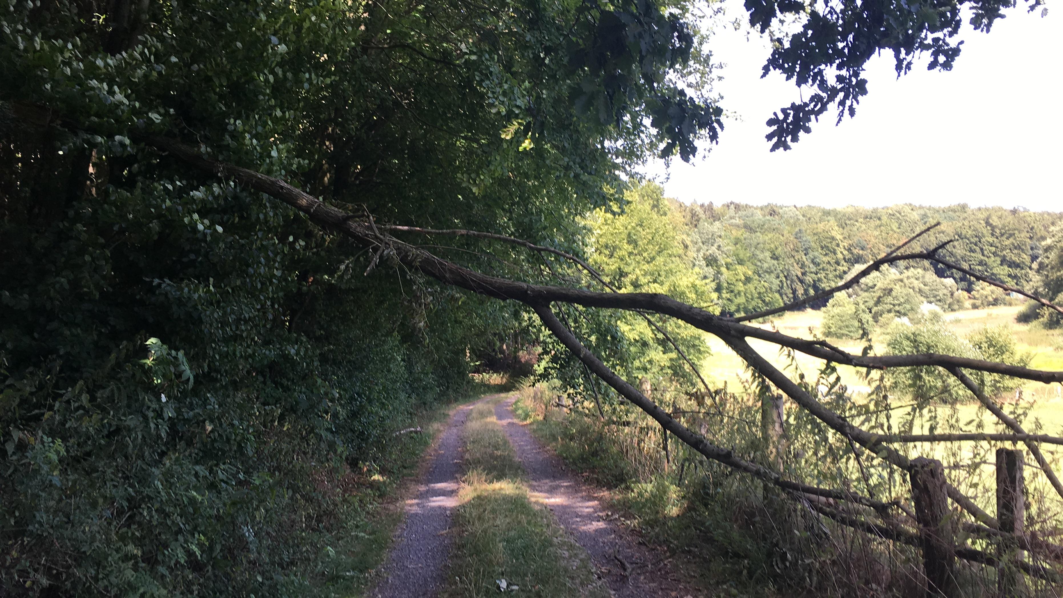 H1 Baum über Straße