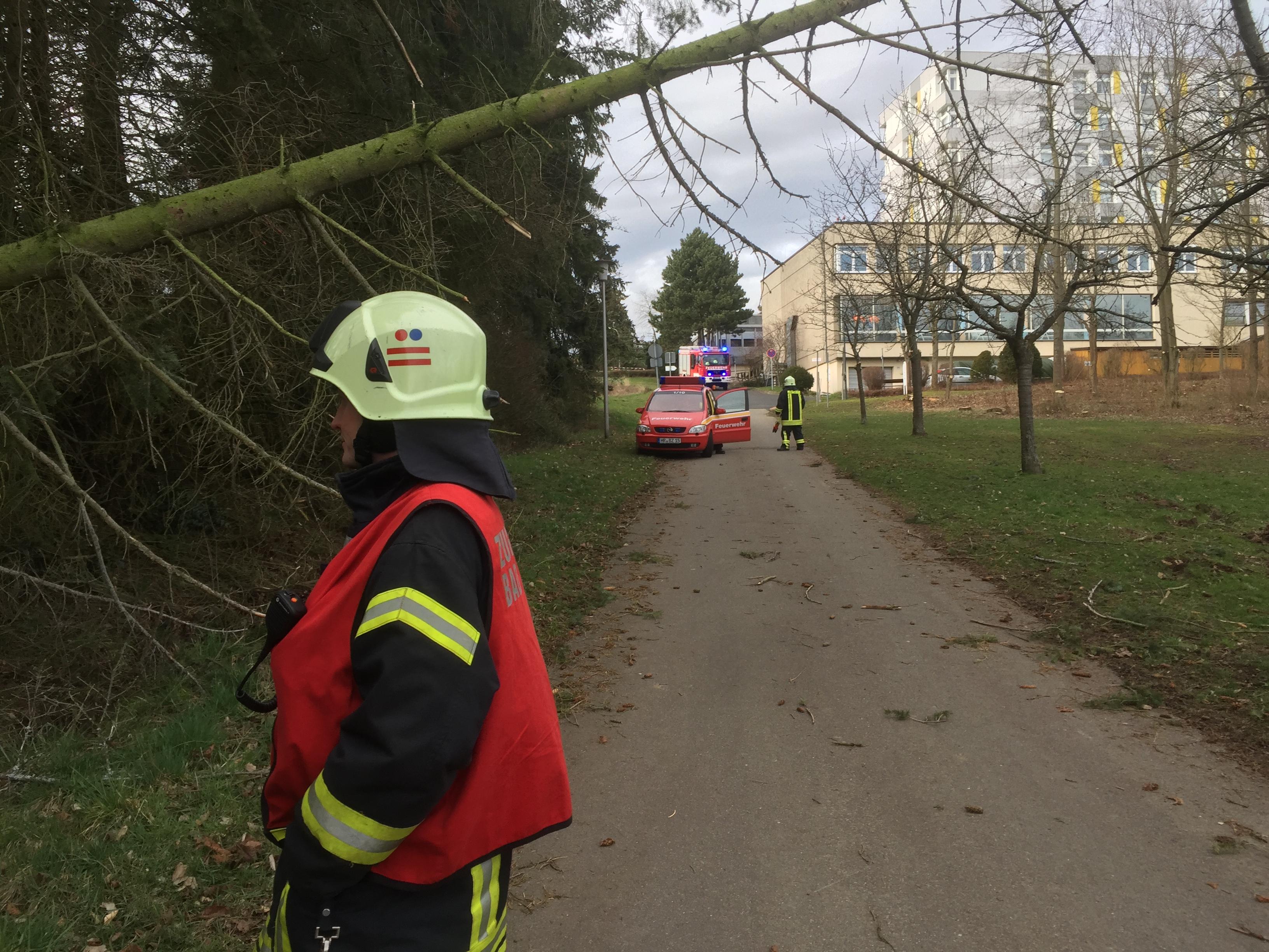 H 1 – Baum auf Straße